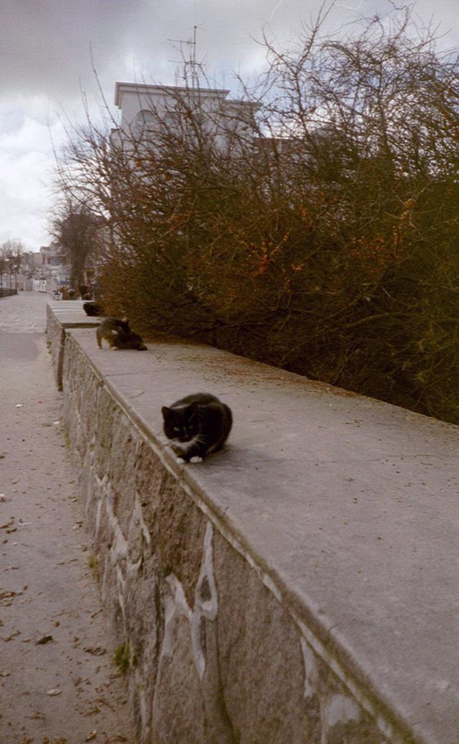 Lomografie – Katzen in Warnemünde