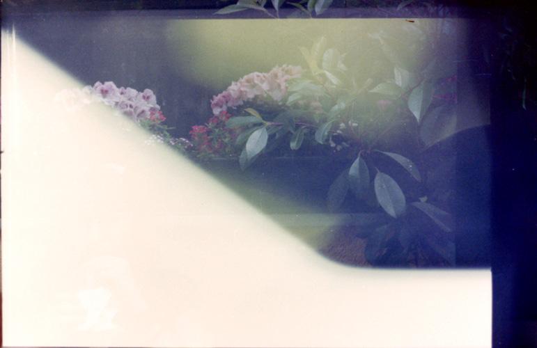 Ying Yang mit Blumen