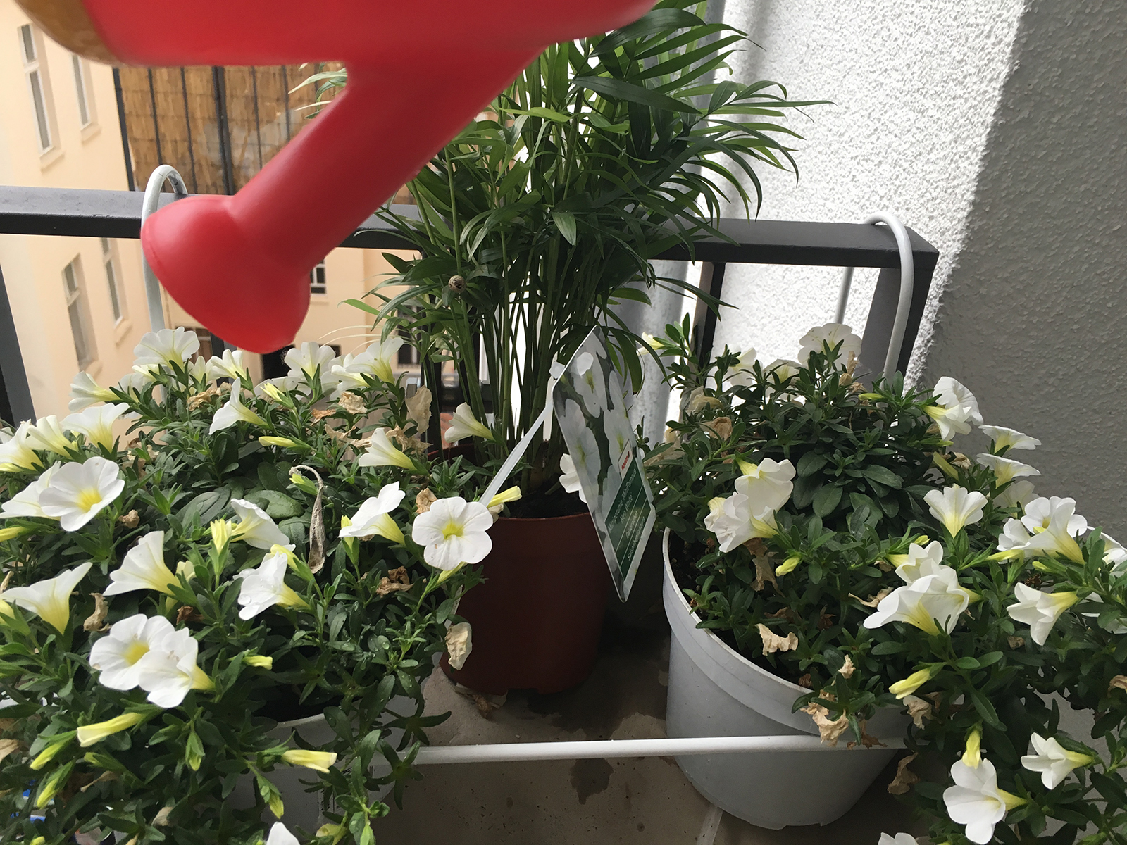 Blumengießen 4 12von12